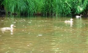 Jūros upės gyvūnija
